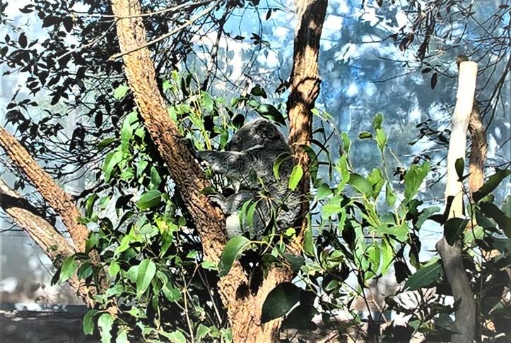 Sydney blog post photo 7 v2